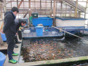 Japanreis 2017: Selectiedag Marudo Koi Farm (deel 5)