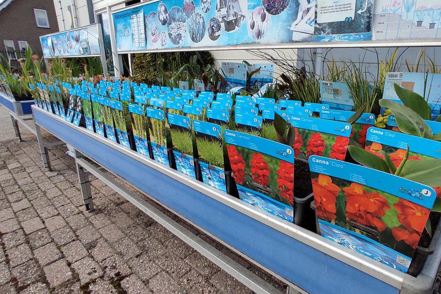Nieuwe waterplanten op voorraad